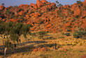 Francis Jupurrula Kelly walking through a landscape of rocks and native trees in the outback.